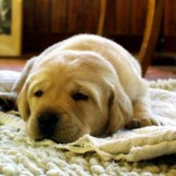 Cuscini per cani